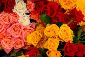 Питання які квіти подарувати дівчині