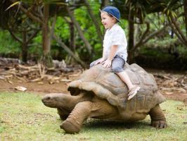 Перший похід в зоопарк з малюком