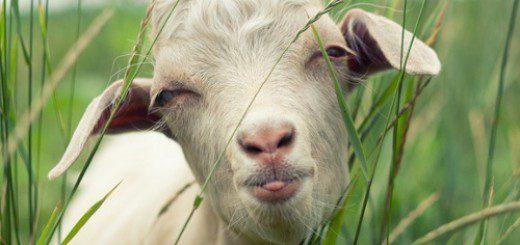 Сценарій на Новий рік 2015. Новорічні конкурси, сценки, ігри на рік зеленої дерев'яної кози!