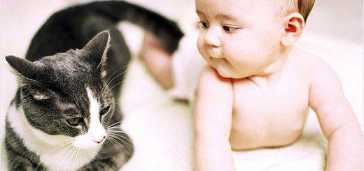 Новонароджений та кішка