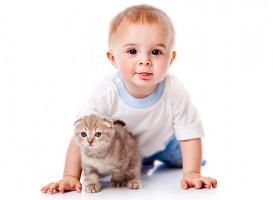 Дитина і кішка правила спілкування