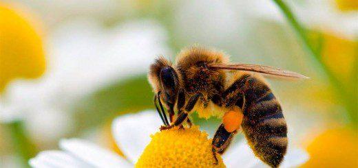 Як допомогти малюкові після укусу бджоли