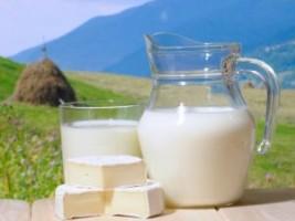 Користь і шкода молока