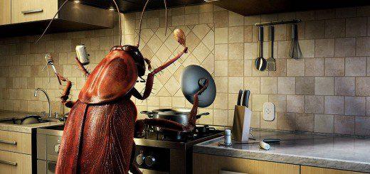 Комахи в будинку